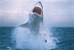 shark-week-1