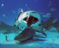shark-week-2