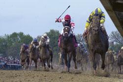 horse-racing-web