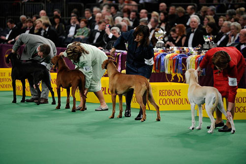 Westminster Dog Show Cnbc